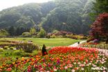 아침고요수목원, 튤립 만개한 '봄나들이 봄꽃축제' 실시